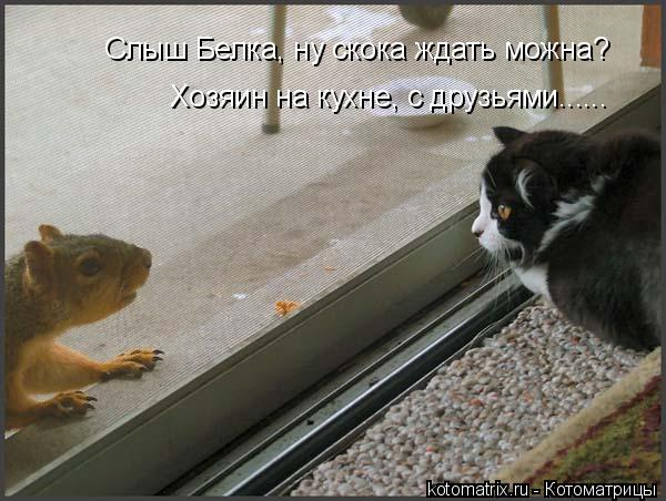 Котоматрица: Хозяин на кухне, с друзьями...... Слыш Белка, ну скока ждать можна?