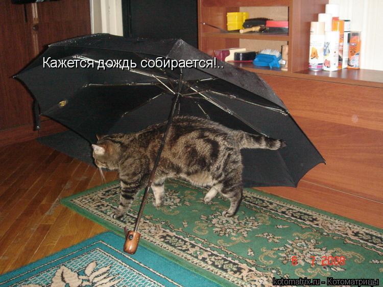 Котоматрица: Кажется дождь собирается!..