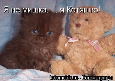 Котоматрица: Я не мишка..... я Котяшко!