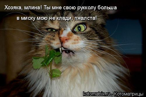 Котоматрица: Хозяка, млина! Ты мне свою рукколу больша   в миску мою не клади, пжалста!