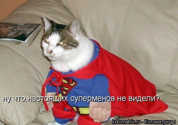 Котоматрица: ну что,настоящих суперменов не видели?