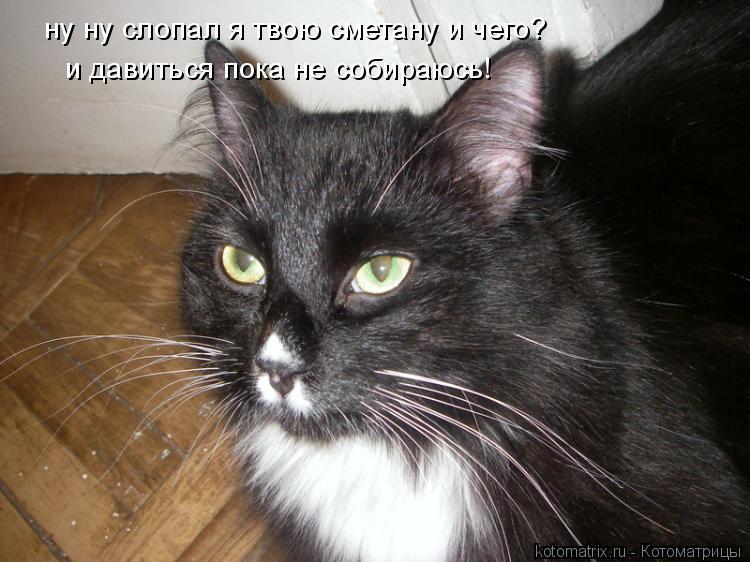 Котоматрица: ну ну слопал я твою сметану и чего? и давиться пока не собираюсь!