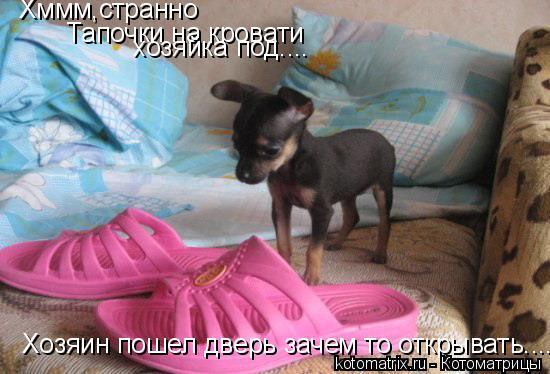 Котоматрица: Хммм,странно  Тапочки на кровати хозяйка под.... Хозяин пошел дверь зачем то открывать....