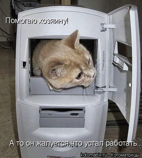 Котоматрица: Помогаю хозяину! А то он жалуется,что устал работать...