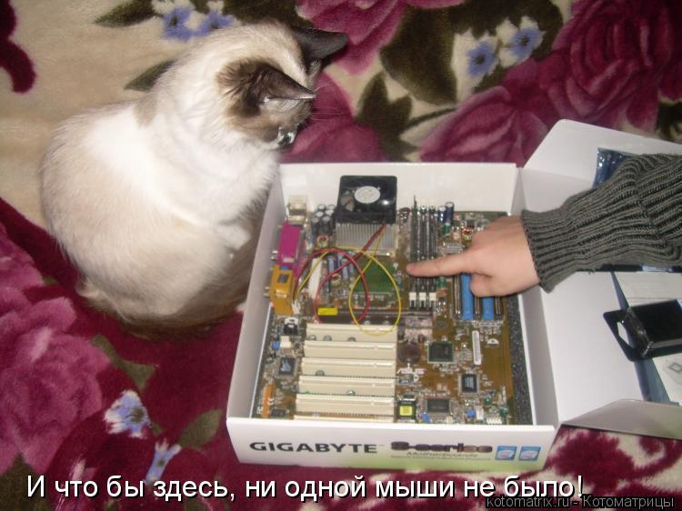 Котоматрица: И что бы здесь, ни одной мыши не было!