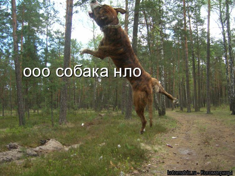 Котоматрица: ооо собака нло