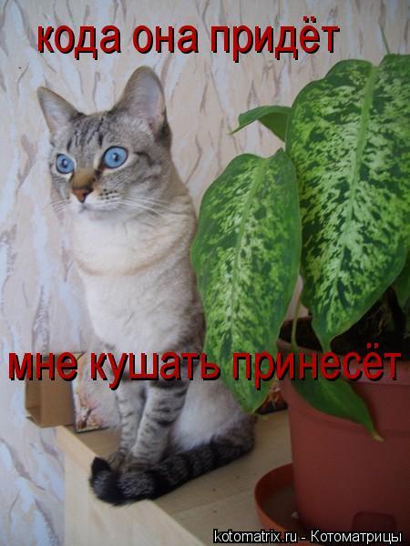 Котоматрица: кода она придёт  мне кушать принесёт ,,,,,,,,,,,,,,,,,,,,  мне кушать принесёт ,,,,,,,,,,,,,,,,,,,,