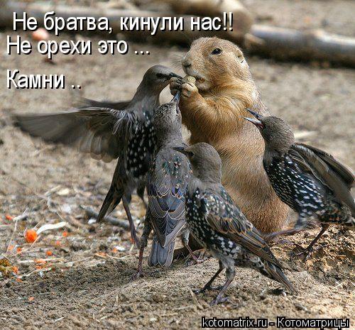 Котоматрица: Не братва, кинули нас!! Не орехи это ... Камни ..