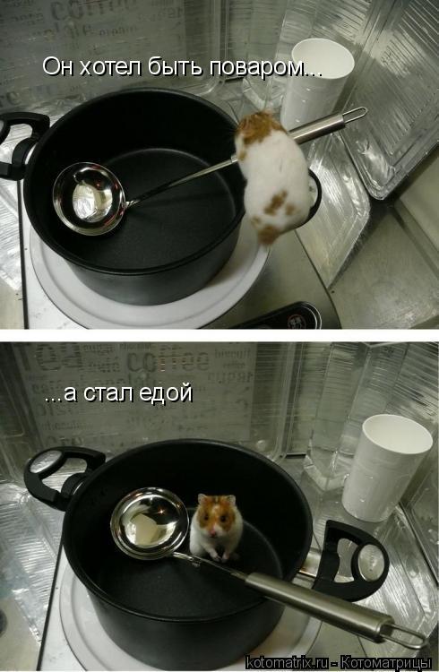 Котоматрица: Он хотел быть поваром... ...а стал едой