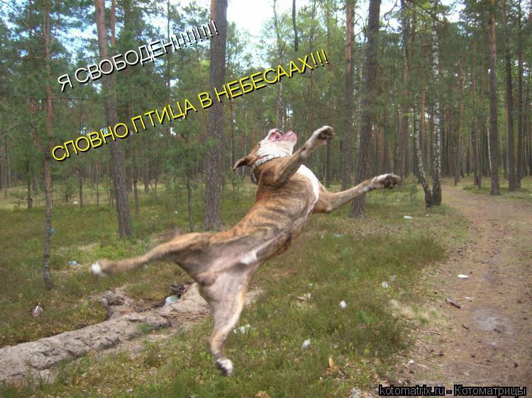 Котоматрица: Я СВОБОДЕН!!!!!!!! СЛОВНО ПТИЦА В НЕБЕСААХ!!!