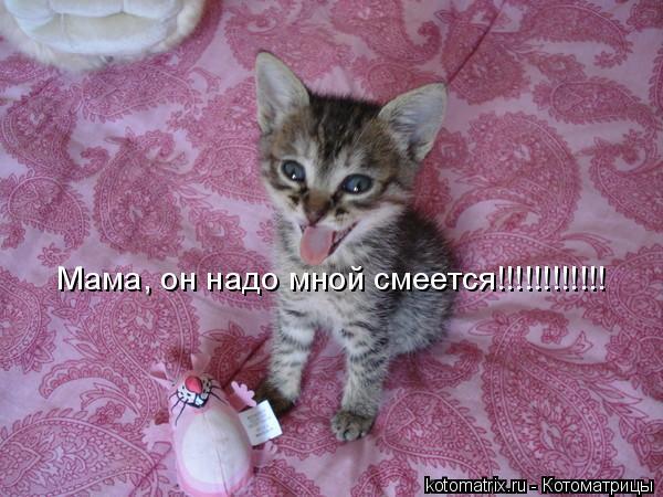 Котоматрица: Мама, он надо мной смеется!!!!!!!!!!!!
