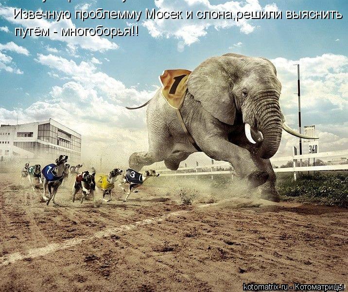 Котоматрица: Извечную проблемму Мосек и сл Извечную проблемму Мосек и слона,решили выяснить путём - многоборья!!
