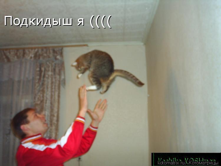 Котоматрица: Подкидыш я ((((