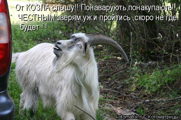 Котоматрица: От КОЗЛА слышу!! Понаварують,понакупають!! ЧЕСТНЫМ зверям,уж и пройтись ,скоро не где  будет ! !
