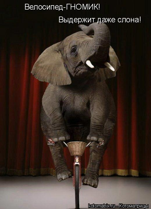 Котоматрица: Велосипед-ГНОМИК! Выдержит даже слона!