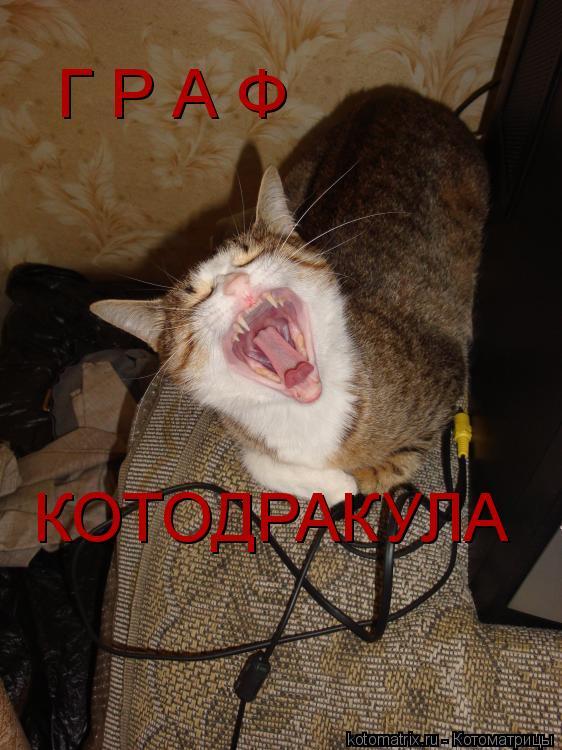 Котоматрица: Г Р А Ф КОТОДРАКУЛА