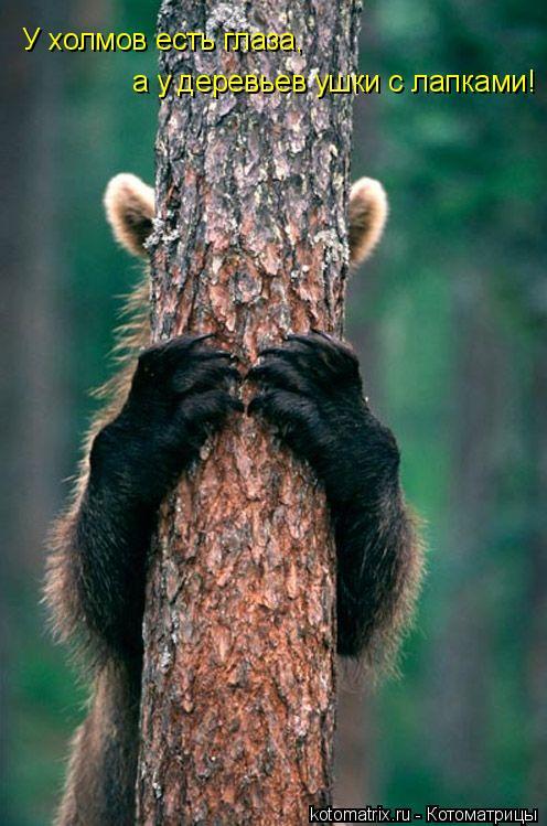 Котоматрица: У холмов есть глаза, а у деревьев ушки с лапками!