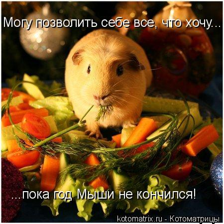 Котоматрица: Могу позволить себе все, что хочу... ...пока год Мыши не кончился!