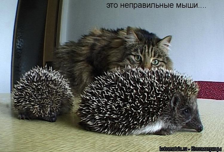Котоматрица: это неправильные мыши....