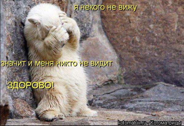 Котоматрица: я некого не вижу  значит и меня никто не видит ЗДОРОВО!