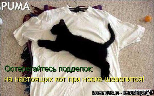 Котоматрица: Остерегайтесь подделок: на настоящих кот при носке шевелится!