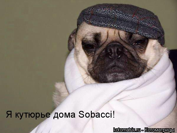 Котоматрица: Я кутюрье дома Sobacci!