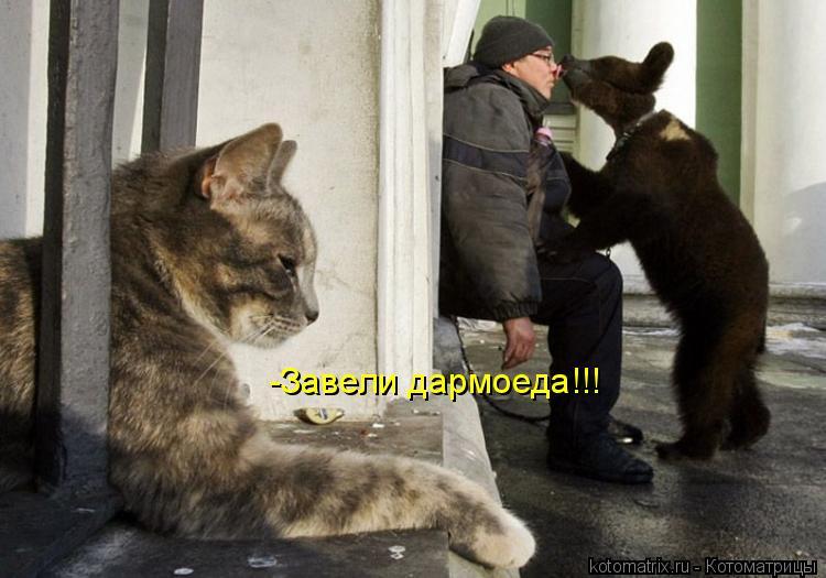 Котоматрица: -Завели дармоеда!!!