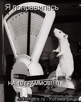 Котоматрица: Я поправилась НА 10 ГРАММОВ!!!!!