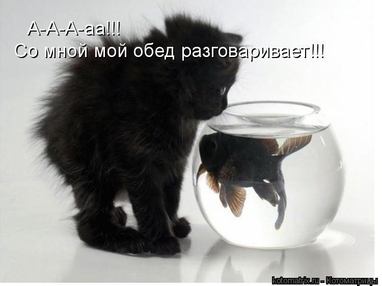 Котоматрица: А-А-А-аа!!! Со мной мой обед разговаривает!!!