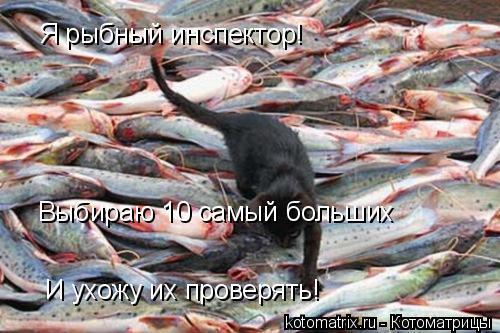 Котоматрица: Я рыбный инспектор! Выбираю 10 самый больших И ухожу их проверять!
