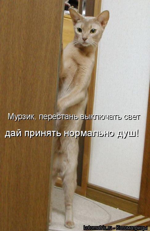 Котоматрица: Мурзик, перестань выключать свет дай принять нормально душ!