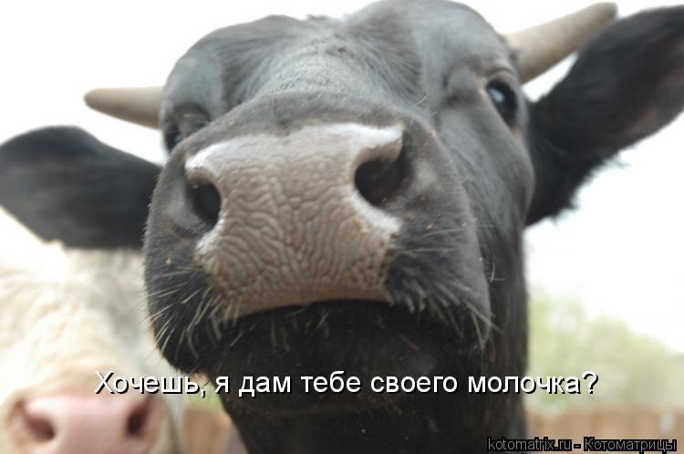 Котоматрица: Хочешь, я дам тебе своего молочка?