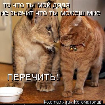 Котоматрица: то что ты мой дядя не значит что ты можеш мне ПЕРЕЧИТЬ!