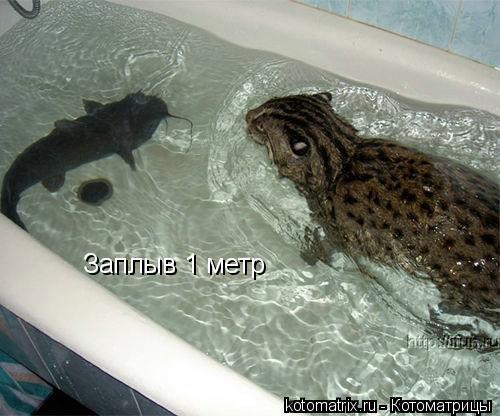 Котоматрица: Заплыв 1 метр