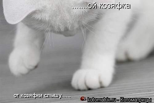 Котоматрица: .......ой козяфка от козяфки слышу......