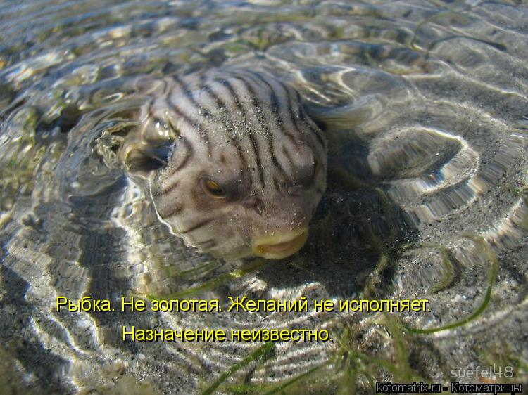 Котоматрица: Рыбка. Не золотая. Желаний не исполняет.  Назначение неизвестно.
