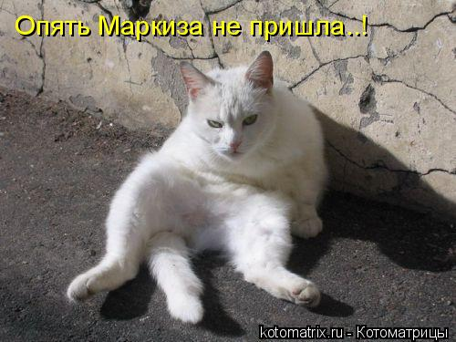 Котоматрица: Опять Маркиза не пришла..!