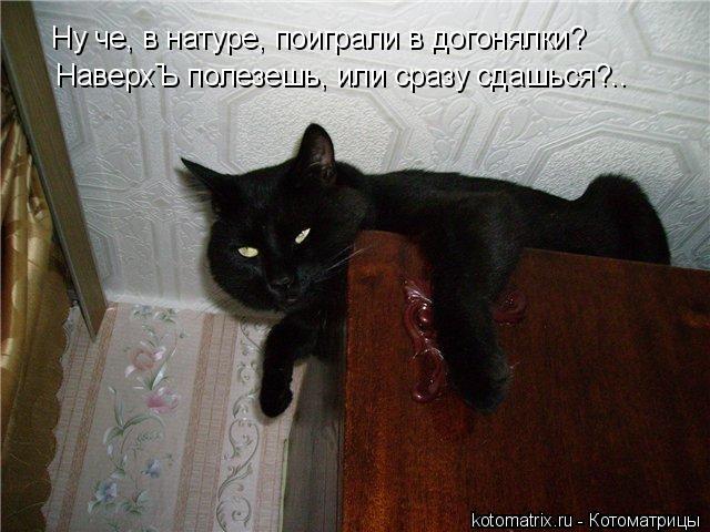 Котоматрица: Ну че, в натуре, поиграли в догонялки? НаверхЪ полезешь, или сразу сдашься?..