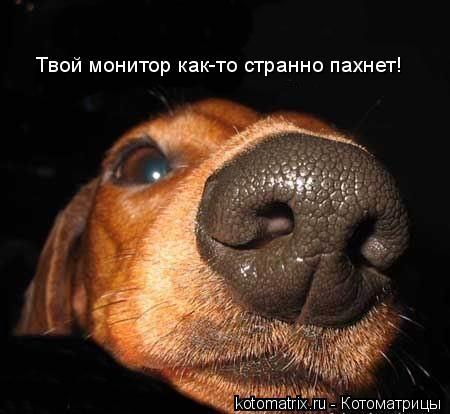 Котоматрица: Твой монитор как-то странно пахнет!