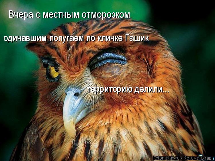 Котоматрица: Вчера с местным отморозком  одичавшим попугаем по кличке Гашик территорию делили...