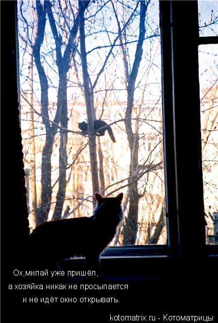 Котоматрица: Ох,милай уже пришёл, а хозяйка никак не просыпается и не идёт окно открывать.