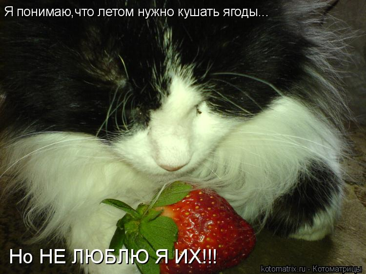 Котоматрица: Я понимаю,что летом нужно кушать ягоды... Но НЕ ЛЮБЛЮ Я ИХ!!!