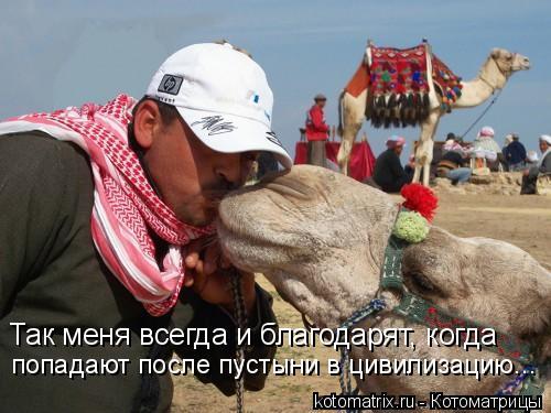 Котоматрица: Так меня всегда и благодарят, когда попадают после пустыни в цивилизацию...