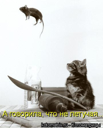 Котоматрица: А говорила, что не летучая...