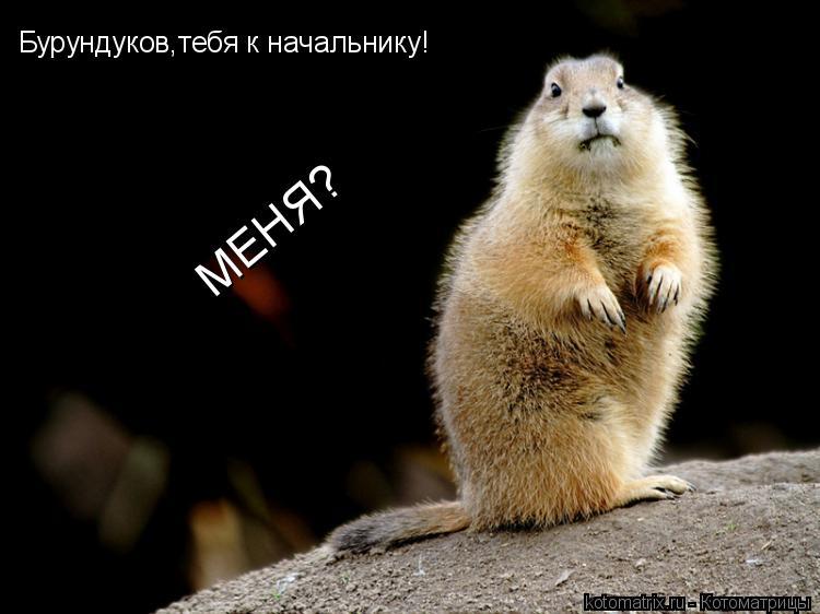 Котоматрица: Бурундуков,тебя к начальнику! МЕНЯ?