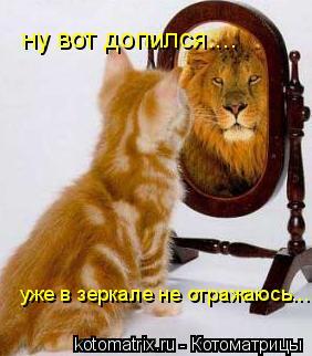 Котоматрица: ну вот допился.... уже в зеркале не отражаюсь...