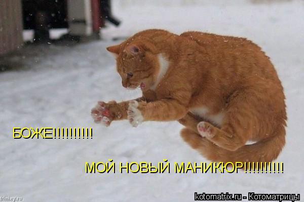 Котоматрица: БОЖЕ!!!!!!!!!! МОЙ НОВЫЙ МАНИКЮР!!!!!!!!!!