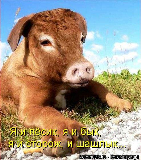 Котоматрица: я и сторож, и шашлык... Я и пёсик, я и бык,