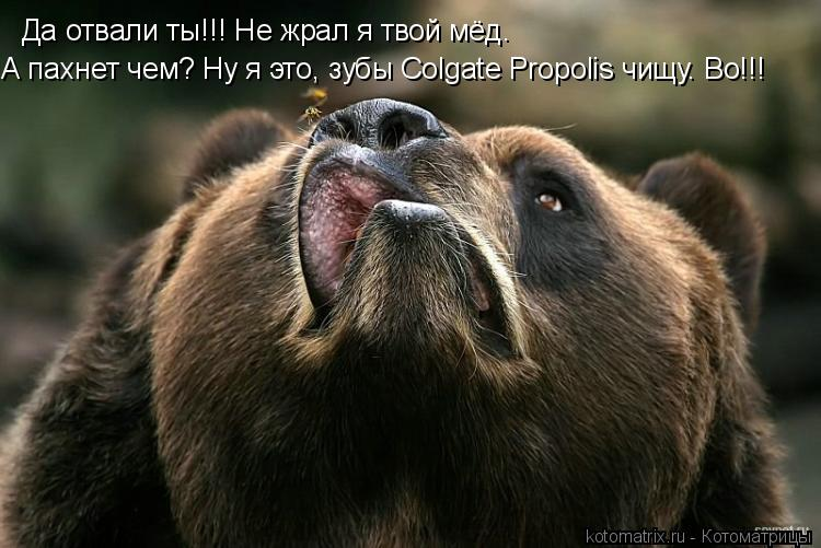 Котоматрица: Да отвали ты!!! Не жрал я твой мёд. А пахнет чем? Ну я это, зубы Colgate Propolis чищу. Bo!!!