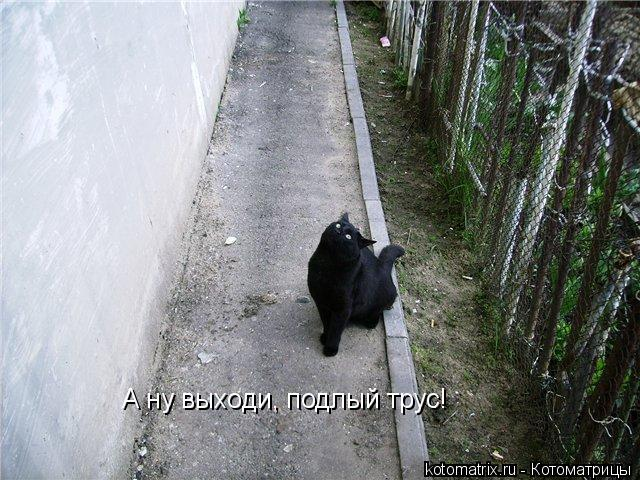 Котоматрица: А ну выходи, подлый трус!